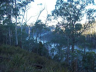 River of Mist at the Gorge
