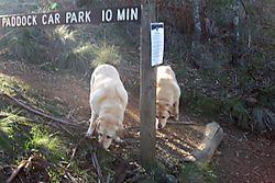 All hail the Paddock Car Park Sign