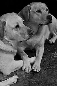 Harki and Peri Together