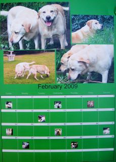 My Own Labrador Calender, Feb