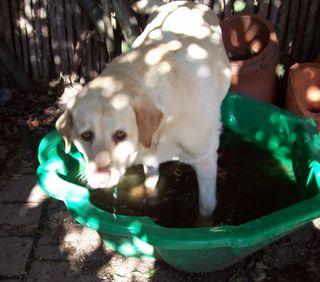 Happy Pool Harki