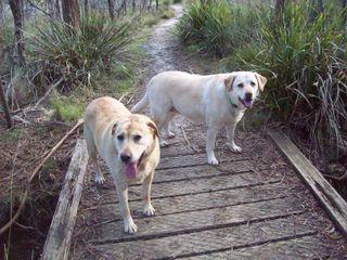 Harki and Peri on the bridge