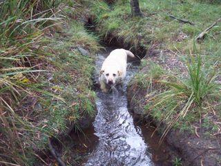 Harki in the creek