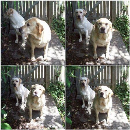 Synchro Pups