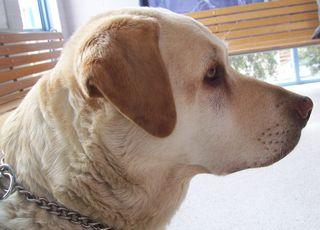 Harki, at the vet