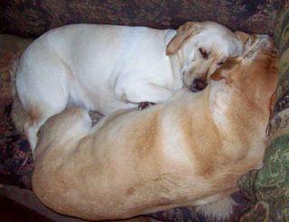 Cuddle pups