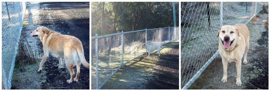 Not fence sitting