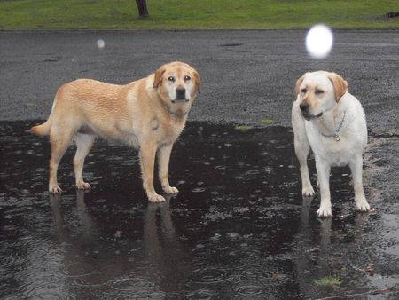 Rainy Day Dogs