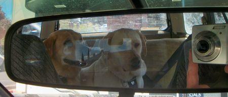 Mirror, mirror in the car