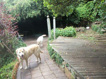 Happy Garden Dogs