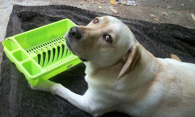 Gilly dish dog