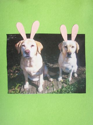 Labrador Bunnies