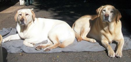 Gilly and Peri love the Sun