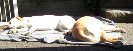 Lying like dogs in the sun