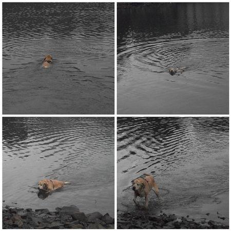 Peri's muddy swim