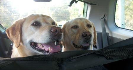 Peepo Pups