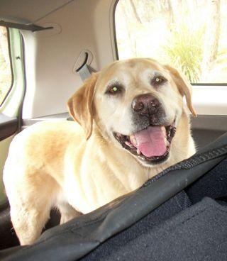 Peri on a road trip