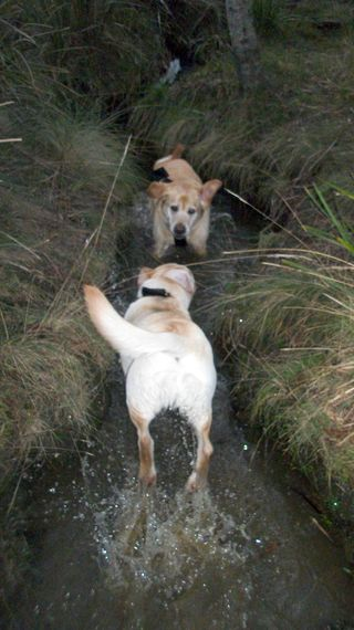 Peri and Gilly in the creek
