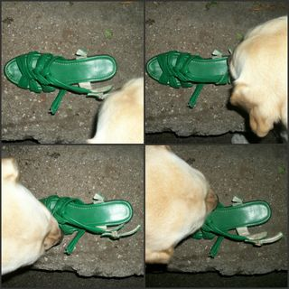 Gilly investigates the shoe