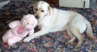 Gilly and the PiggyBunny 3