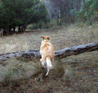 Peri leaps like a pony