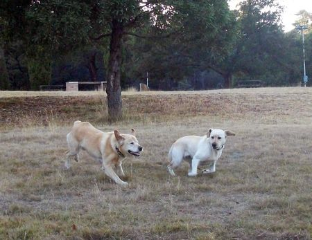 Peri and Gilly running just for fun