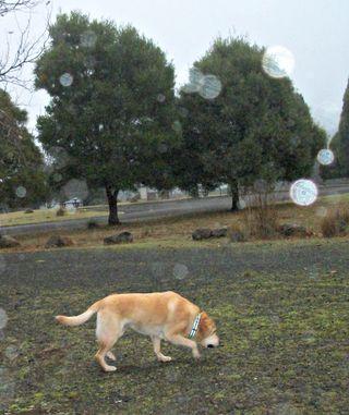 Peri rainy day