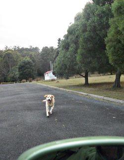 Peri ran away