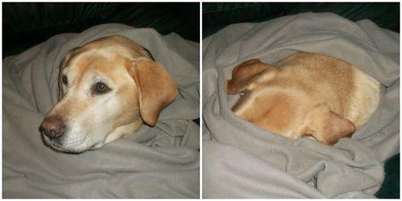 Peri wants a dark sleep