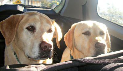 Home again Pups