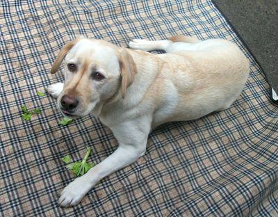 Gilly loves celery