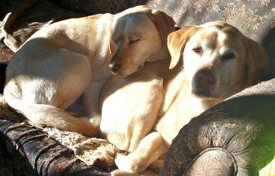 Sunny pups