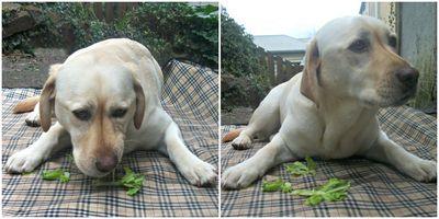 Gilly's celery dilemma