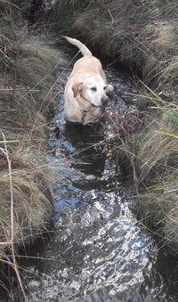 Peri jumped into the creek