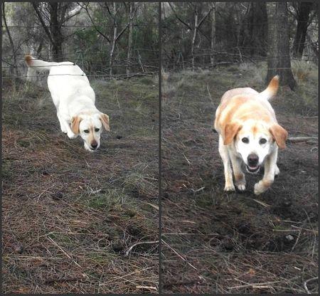 Running back from running away