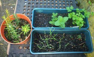 Mini garden OK