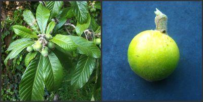 Strange fruits and tree