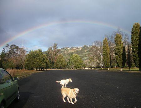 Rainbow labs