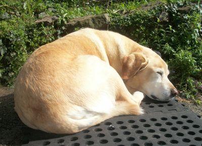 Peri asleep in the sun
