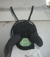 Antennae and mandibles
