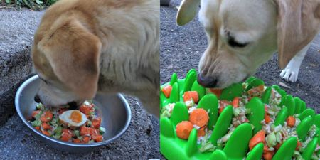 Easter eggs for Labradors
