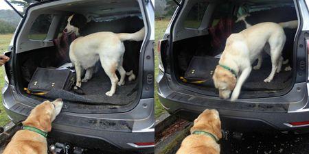 Rafa's car adventure