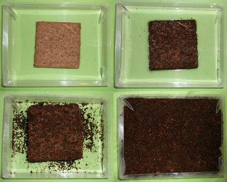 Jamie greenhouse soil