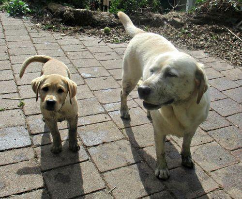 Two muddy girls