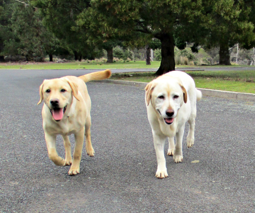Hedy and Gilly happy on the walk