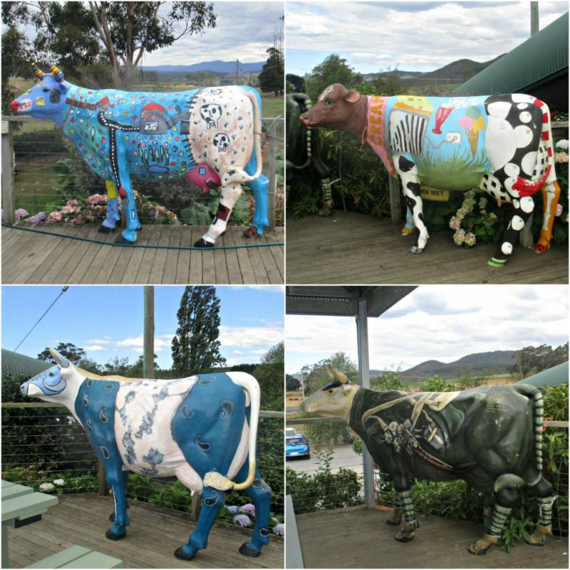Ashgrove cows