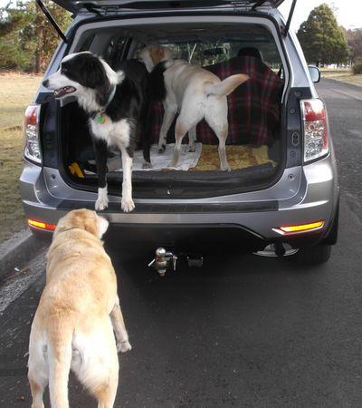 Gilly in Rafa's car