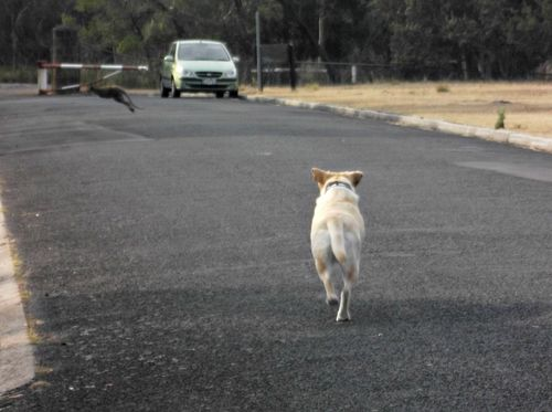 There's wallaby