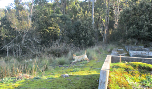 Gilly and Hedy in the bush