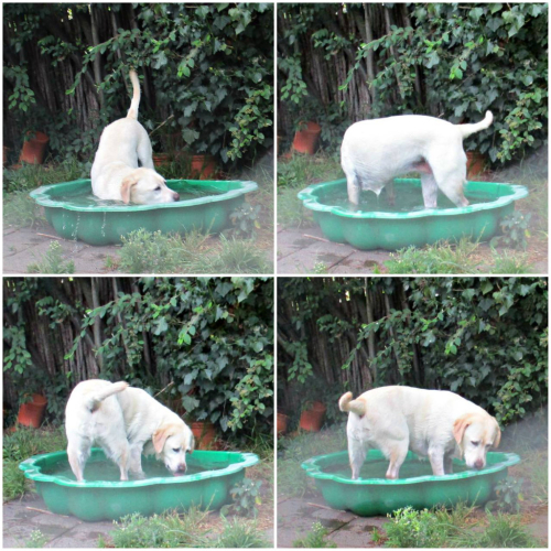 Gilly's paddle pool play